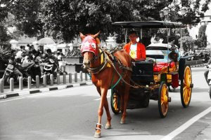 alat transportasi tradisional kuda