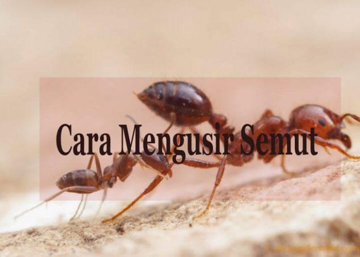 Cara Mengusir Semut dengan aman