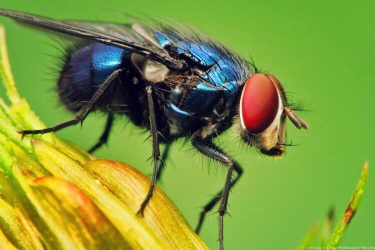cara mengusir lalat hijau