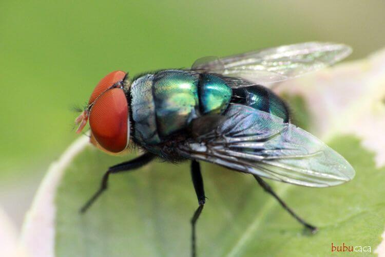 cara mengusir lalat yang ampuh