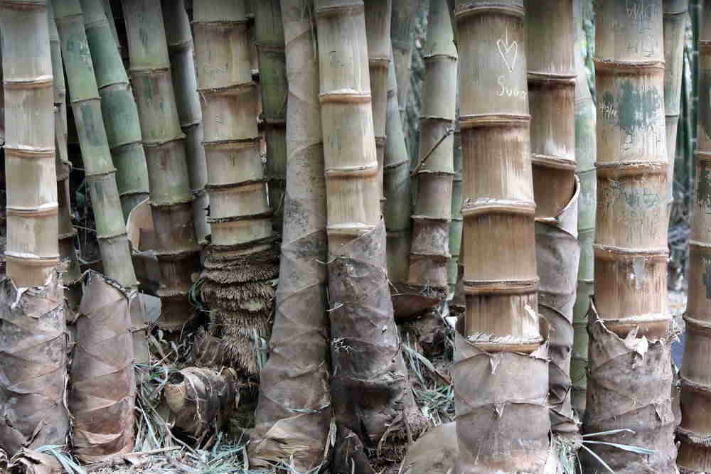 jenis bambu dan fungsinya