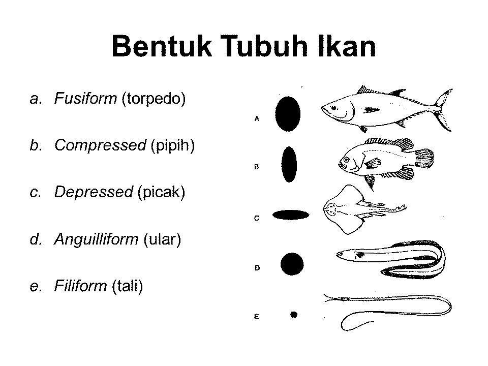 Morfologi Ikan Dan Bagian Bagiannya Lengkap Dengan Gambar
