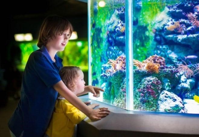 aerotor aquarium