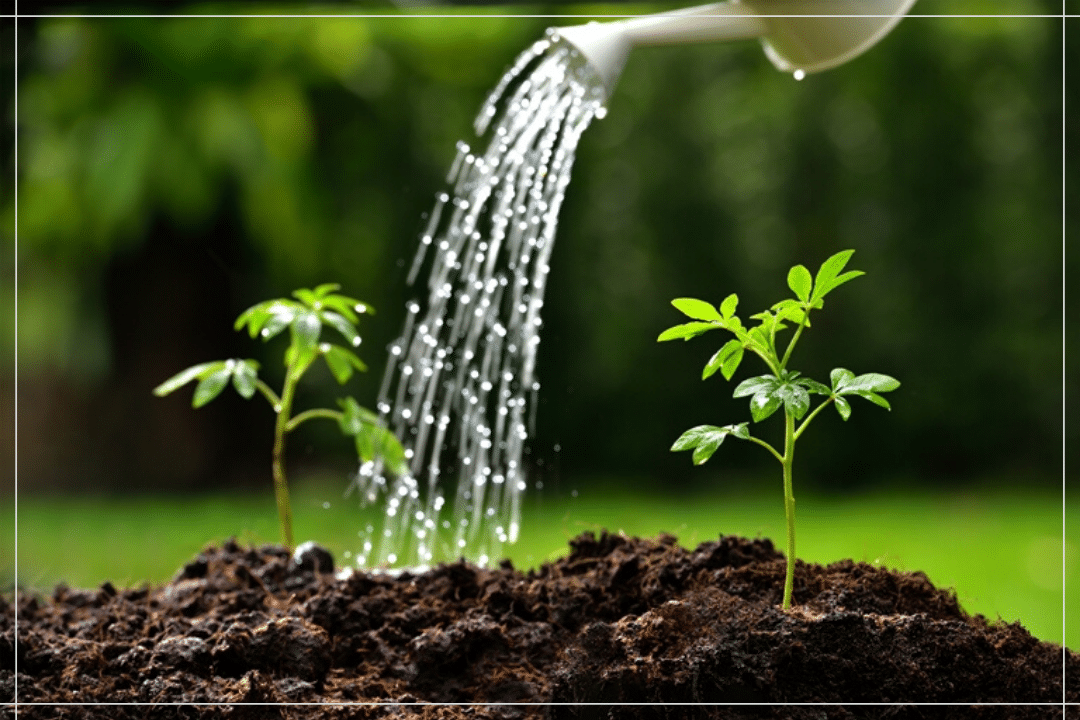 pupuk terbaik untuk tanaman